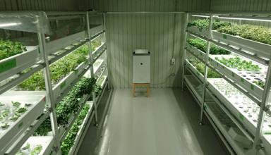 """NHK「おはよう関西」でも""""新たな働き方""""として注目屋内 農園を活用した障害者雇用支援サービスを大阪府枚方市でスタート"""